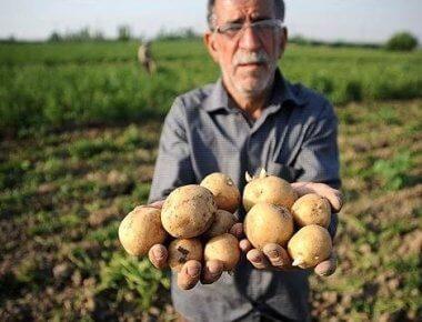 اقتصاد مقاومتی صادرات کشاورزی