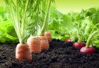 بخش کشاورزی اقتصاد مقاومتی 140x97 - بخش کشاورزی می تواند پیشران اقتصاد مقاومتی باشد