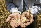 محصولات اساسی کشاورزی اقتصاد مقاومتی 140x97 - 7 میلیارد دلار واردات و 1.5 میلیارد دلار صادرات محصولات اساسی