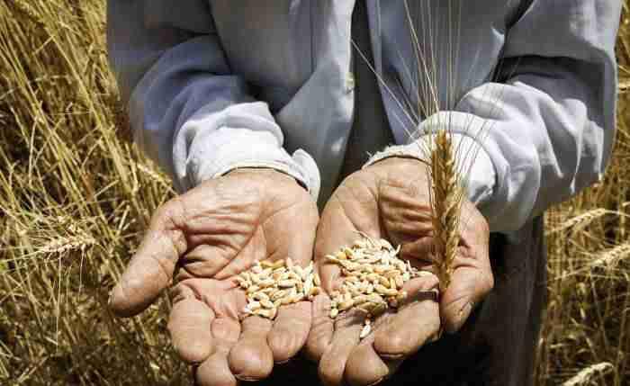 محصولات اساسی کشاورزی اقتصاد مقاومتی - ظرفیت بخش کشاورزی در ایجاد اشتغال با حمایت دولت فعال میشود