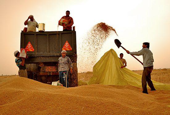 واردات کشاورزی اقتصاد مقاومتی e1494500688878 - دولت قیمت خرید تضمینی گندم را در سال جاری ثابت نگه داشت