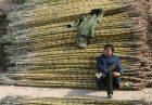 SugarImport 140x97 - چین تعرفه واردات شکر را افزایش داد
