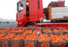 االعغغع 140x97 - عراق و افغانستان مشتریان پروپاقرص گوجه فرنگی ایران