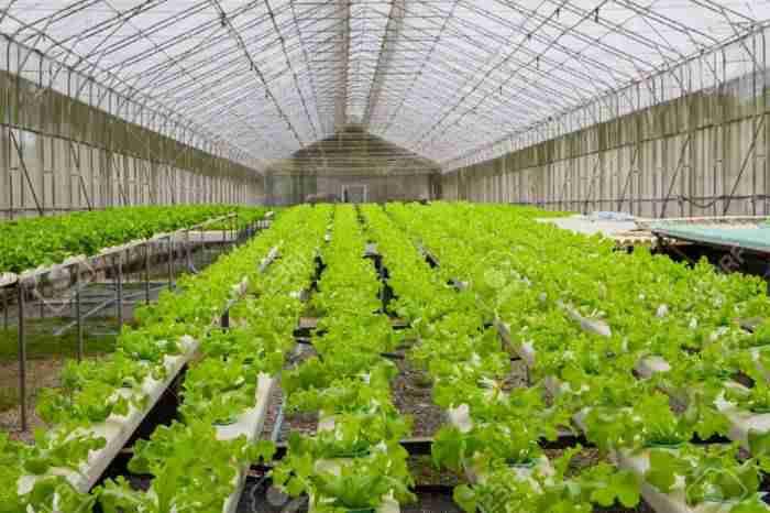دستیابی استان یزد به رتبه دوم کشور در تولیدات گلخانه ای