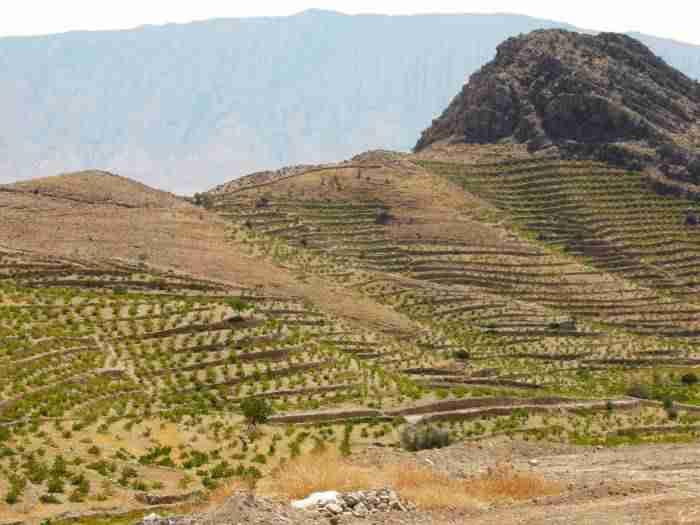 احداث باغ دیم انگور - افزایش 650 میلیون متر مکعبی منابع آب کشور با ایجاد باغات دیم