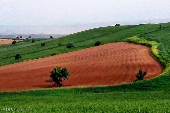 16967051 - اختصاص 75 درصد از اراضی کشاورزی استان کرمانشاه به کشت دیم