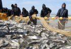 n82677935 71893389 1 140x97 - تامین امنیت غذایی و اشتغالزایی نتیجه حمایت از تولید ماهی تیلاپیا