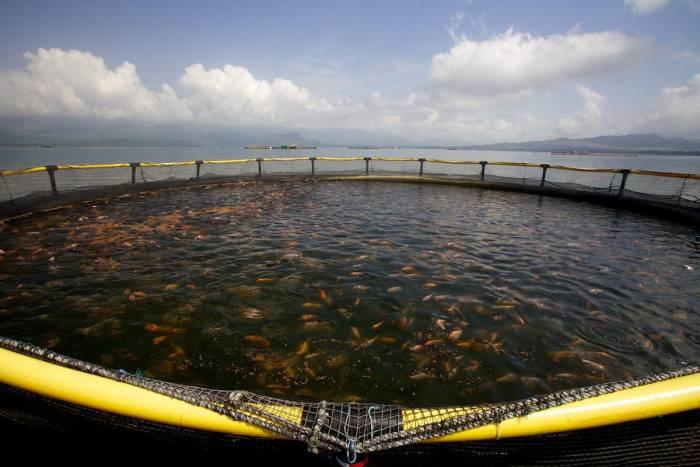 photo ۲۰۱۷ ۱۰ ۱۵ ۱۳ ۱۰ ۲۵ - ایجاد ۶ هزار شغل در هندوراس با تولید ماهی تیلاپیا در قفس