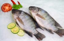 تیلاپیا - سهم 25 درصدی مکزیک از تولید ماهی تیلاپیا در آمریکای لاتین