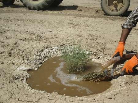 اختصاص 850 میلیون تومان اعتبار برای اجرای پروژه ترسیب کربن در گلستان