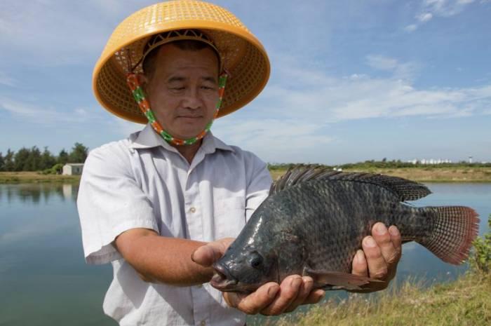 ماهی تیلاپیا اقتصاد مقاومتی - آمریکا بزرگترین مشتری تیلاپیای چینی