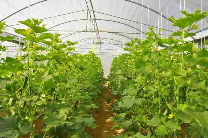 04 ta rural development 652 ab - وزرات کشاورزی به دنبال توسعه 2240 هزار هکتاری واحدهای گلخانهای است