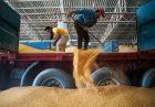 1730253 140x97 - ادعای عضو اتاق بازرگانی به عدم پرداخت 50 درصد از مطالبات گندمکاران گلستان