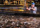 b326ea8583e11c632d1b94417958b95d 140x97 - قوانین هوشمندانه دولت آمریکا برای تولید ماهی تیلاپیا