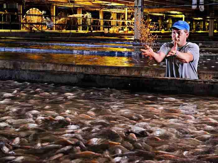 b326ea8583e11c632d1b94417958b95d - قوانین هوشمندانه دولت آمریکا برای تولید ماهی تیلاپیا