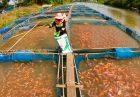 shutterstock 69539743 140x97 - استانداردهای تولید ماهی تیلاپیا در بین آبزیپروران جهان
