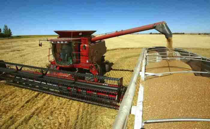 grain - اوکراین برای صادرات گندم بازار اندونزی را جایگزین هند کرد