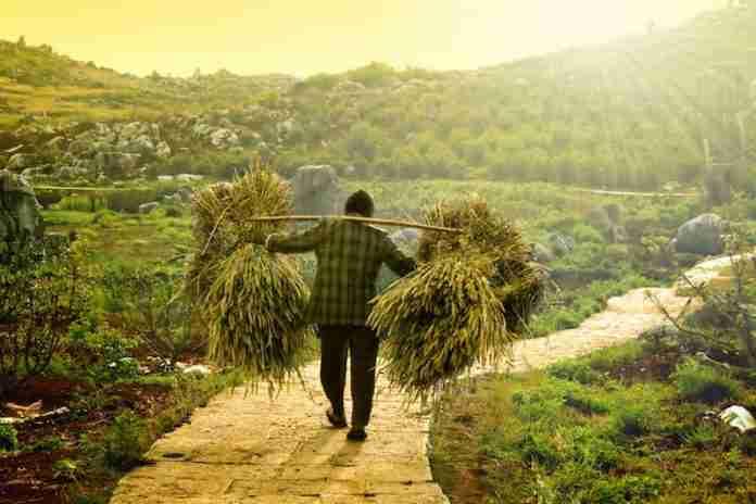 xFarmer 696x464.jpg.pagespeed.ic .yvLfTaIG27 - حمایت یارانه ای دولت آلبانی از صادرات محصولات کشاورزی