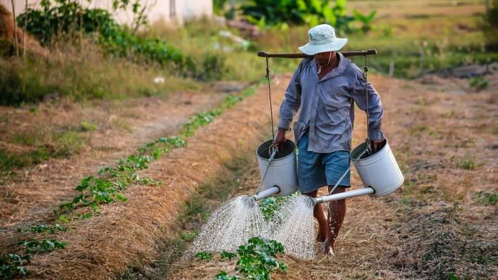 ChinaAgri - حمایت از بخش کشاورزی برنامه اصلی چین تا سال 2050