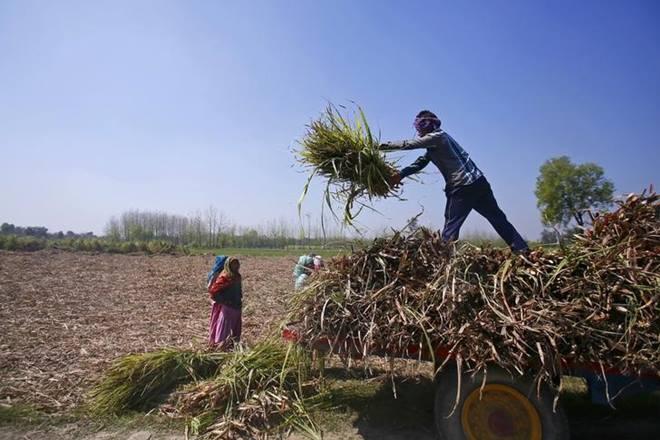 Farm Credit Reuters 1 - افزایش رفاه کشاورزان هندی با اصلاح روش بازاریابی محصولات