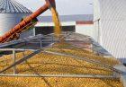 image large 140x97 - واردات گندم از روسیه و قزاقستان به منظور افزایش تولید و صادرات آرد