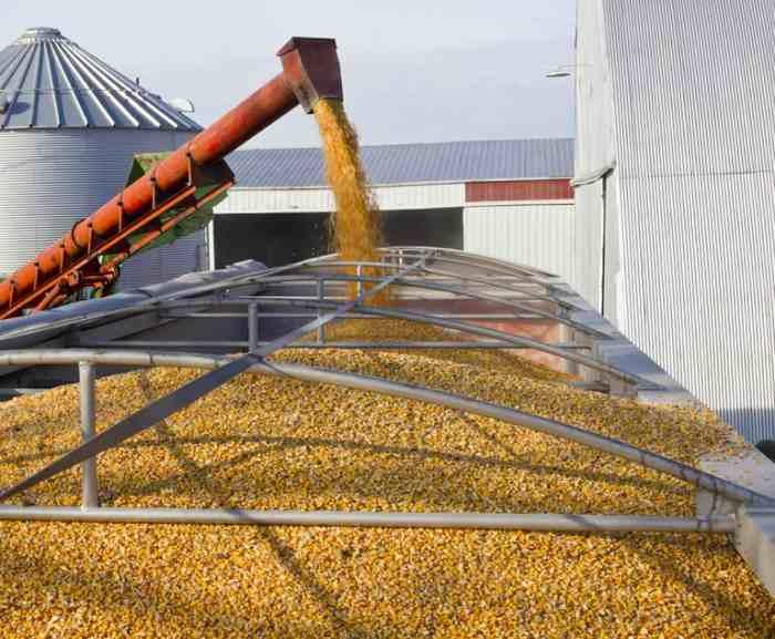 image large - واردات گندم از روسیه و قزاقستان به منظور افزایش تولید و صادرات آرد