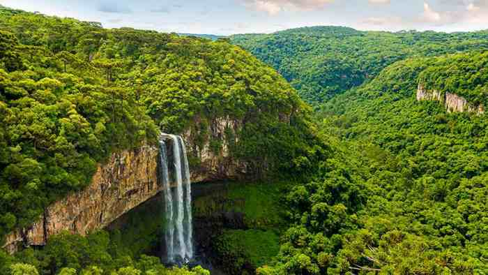 Amazon 870 - 3 شیوه حل «بحران آب» به کمک جنگلها