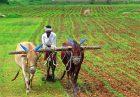 India Farming 140x97 - خودکفایی در تولید محصولات کشاورزی با توسعه کشت دیم در هند