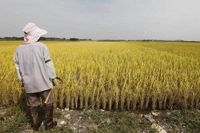Farmers Reu - 3 اقدام دولت هند در حمایت از صادرات محصولات کشاورزی