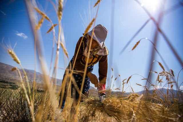 خودکفایی آب یا غذا - مدیریت بهینه منابع آبی با خودکفایی در محصولات اساسی تناقض دارد؟