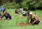 tree planting Ethiopia 140x97 - تامین امنیت غذایی در اتیوپی با مدیریت یکپارچه عملیات آبخیزداری