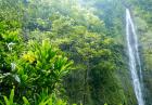 hawaii waterfall footage green forest nature water travel island beautiful rainforest environment tourism motion long exposure evd 0umoe  F0000 1 140x97 - طرح اجرای عملیات آبخیزداری در ایالت نیومکزیکوی آمریکا