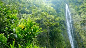 hawaii waterfall footage green forest nature water travel island beautiful rainforest environment tourism motion long exposure evd 0umoe  F0000 1 - طرح اجرای عملیات آبخیزداری در ایالت نیومکزیکوی آمریکا
