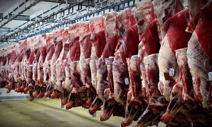 سالانه 300 هزار راس دام سبک به خارج از خراسان شمالی صادر می شود/ کاهش 30 درصدی قیمت گوشت قرمز با افزایش تولید