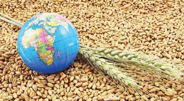 تولید گندم ژاپن اقتصاد مقاومتی