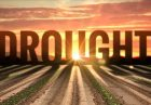 webimage 71BAB7B1 E340 4063 853AB86A1CB28107 140x97 - افزایش کمک های مالی اتحادیه اروپا به کشاورزان متضرّر از خشکسالی
