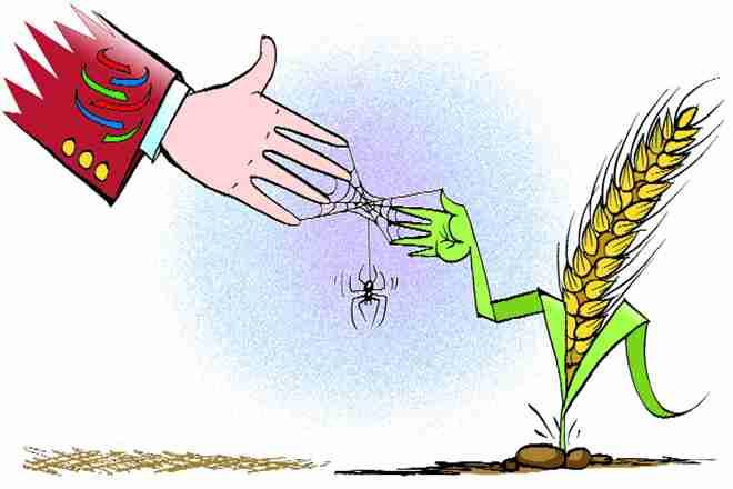 حمایت از بخش کشاورزی