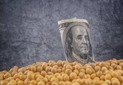 واردات دانه سویا از آمریکا