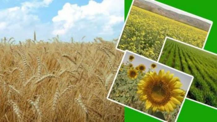 تعیین قیمت محصولات زراعی اقتصاد مقاومتی