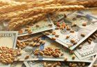 حمایت از تولید گندم اقتصاد مقاومتی