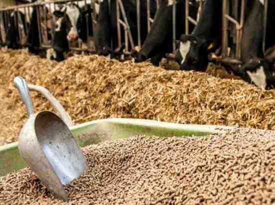 تخصیص ارز 4200 تومانی به واردات ضد اقتصاد مقاومتی