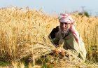 حمایت از کشاورزان در پاکستان اقتصاد مقاومتی