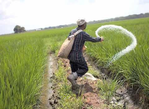 یارانه کود کشاورزی هند