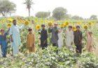 حمایت دولت پاکستان از تولید دانههای روغنی اقتصاد مقاومتی
