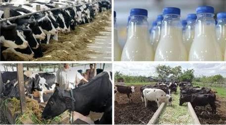 واردات شیر هند