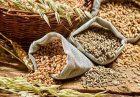ممنوعیت صادرات محصولات اساسی در اتحادیه اقتصادی اوراسیا اقتصاد مقاومتی