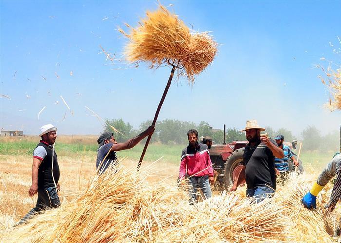 کشاورزی سوریه