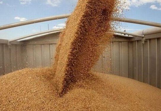 لزوم جلوگیری از قاچاق گندم اقتصاد مقاومتی