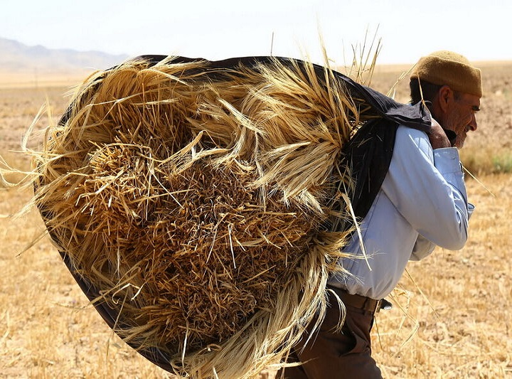 قیمت خرید تضمینی محصولات اساسی کشاورزی اقتصاد مقاومتی