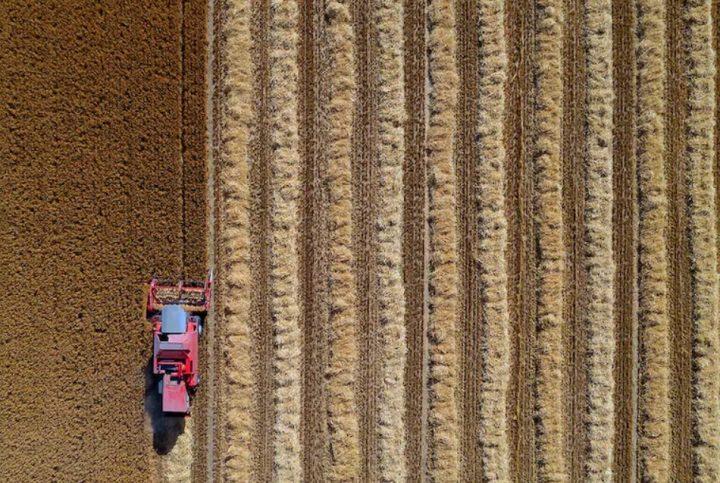 افزایش قیمت محصولات اساسی کشاورزی آمریکا در بازار جهانی